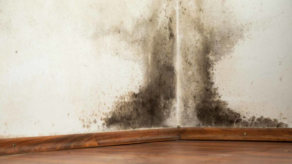 How To Prevent Mold Growth