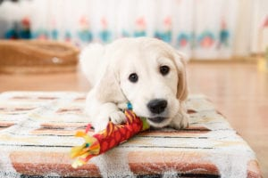 How To Remove Pet Odor from A Home