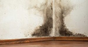 Simple Steps To Prevent Mold Growth After A Flood