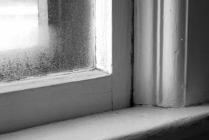 What To Do Against Mold Growth